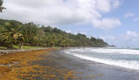 Windstar Cruises black sand beach Dominica Caribbean islands