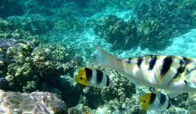 Windstar Cruises Coral Garden Snorkeling