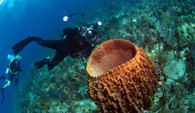 Windstar Cruises scuba diver shooting picture of barrel sponge