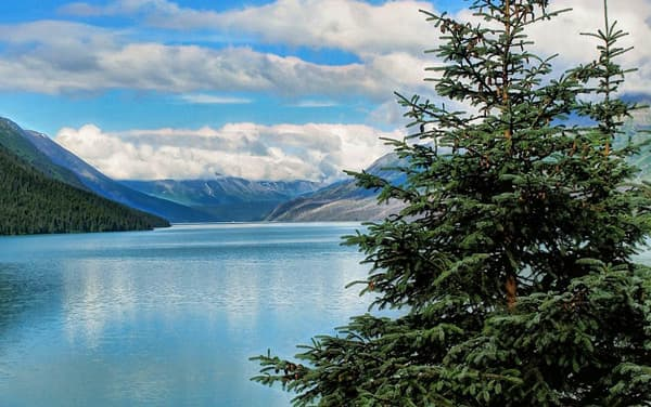 Cruises from Seward, Alaska from $599*