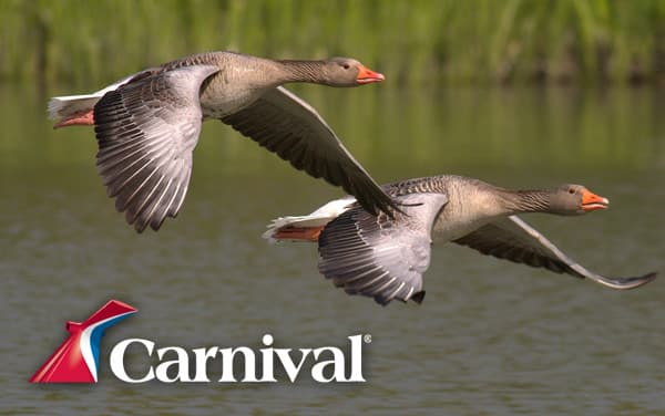 Carnival Canada and New England cruises from $459*