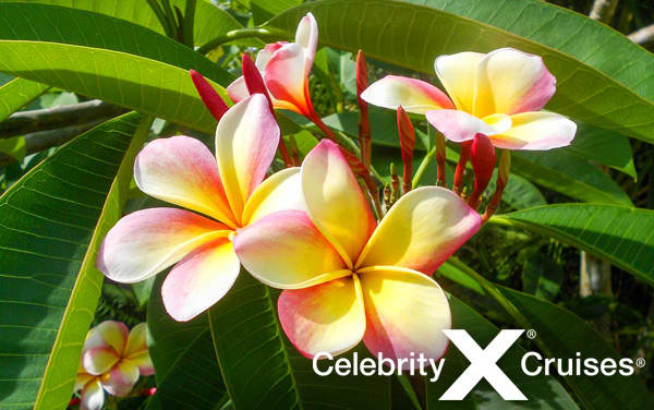 Celebrity Hawaii cruises from $1,734*