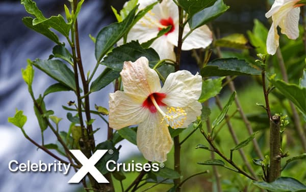 Celebrity Western Caribbean cruises from $399*