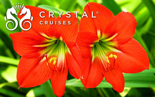 Crystal Caribbean cruises from $2,359*