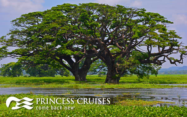 Princess Asia cruises from $777*