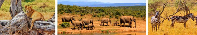 Celebrity Explorations - African Safari