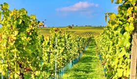 Avalon Waterways Wine Cruise