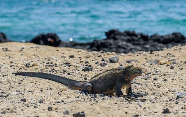 Silver Origin Daphne Island (Galapagos) Departure Port