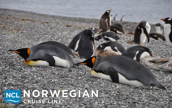 Norwegian Cruise Line Antarctica cruises from $1,770.30*