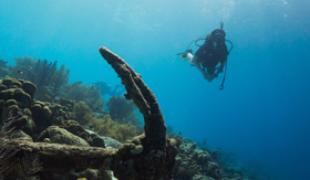 Diving in the Caribbean Coral Gardens