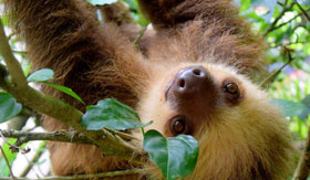 A sloth enjoying the rescue