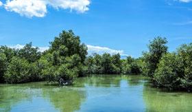 Mangrove field in Hell