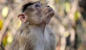 A resident of Monkey Island