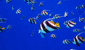 Tropical fish in the Caribbean