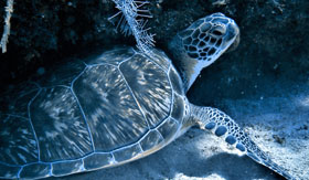 Up close and personal with sea turtle in Roatan