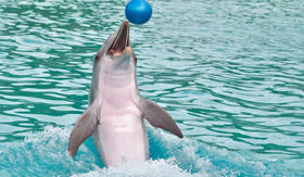 A playful dolphin at the Dolphin Discovery Center in Peurto Vallarta, Mexico.