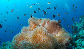 World-class scuba diving waters in Cabo San Lucas, Mexico, consisting of a variety of vibrant tropical fish.