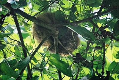 The sleeping sloth