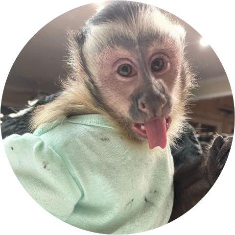 Capuchin world