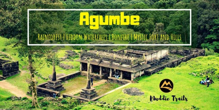 New Year Special: Agumbe Rainforest Camping