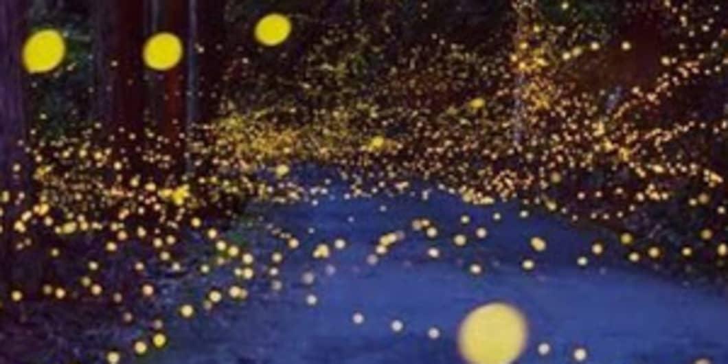 Firefly Festival at Bhandardara