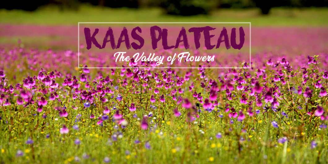 Kaas Plateau - The Valley of Flowers | Mischief Treks