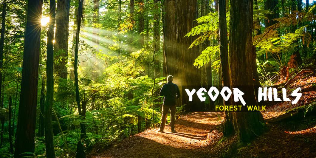 The Yeoor Hills Forest Walk