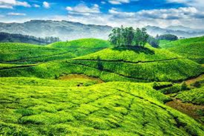 Munnar Trek And Camping | Plan The Unplanned - August