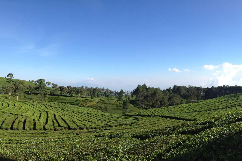 Bali Tour Sightseeing 1