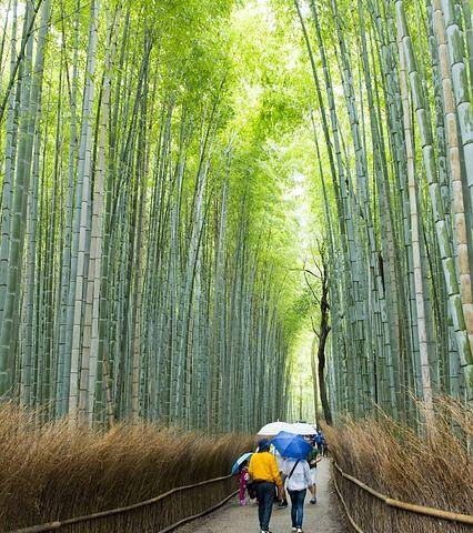 sagano forest