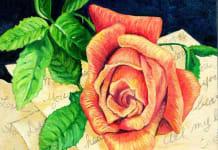 maturerose 218x150 rema