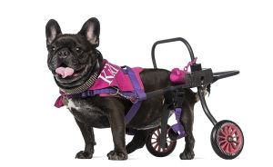 The Best Wheelchair for dogs