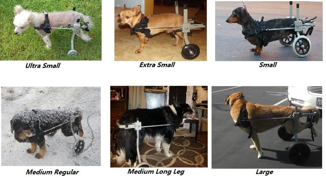 Dog wheelchairs by Huggiecart