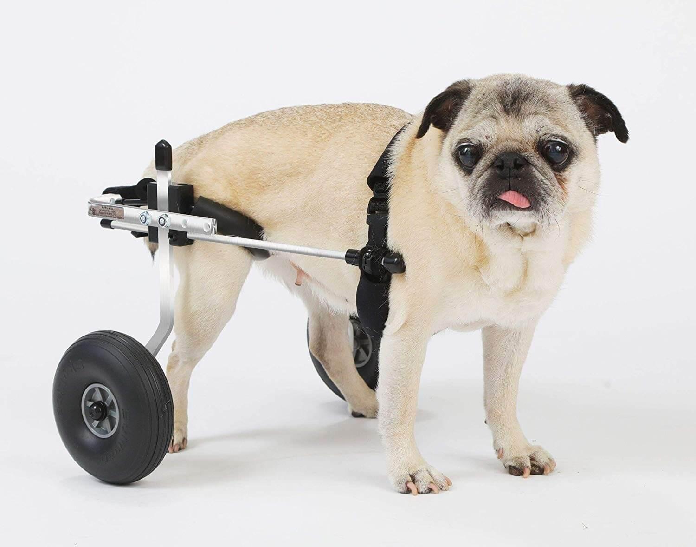 Best Small Dog Wheelchair