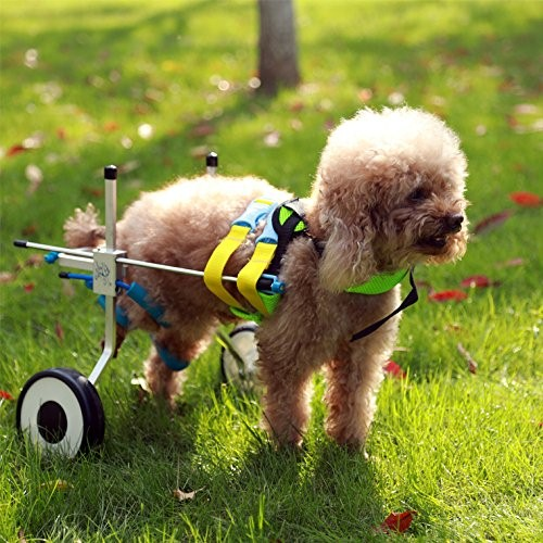 Adjustable Wheelchairs for small dog
