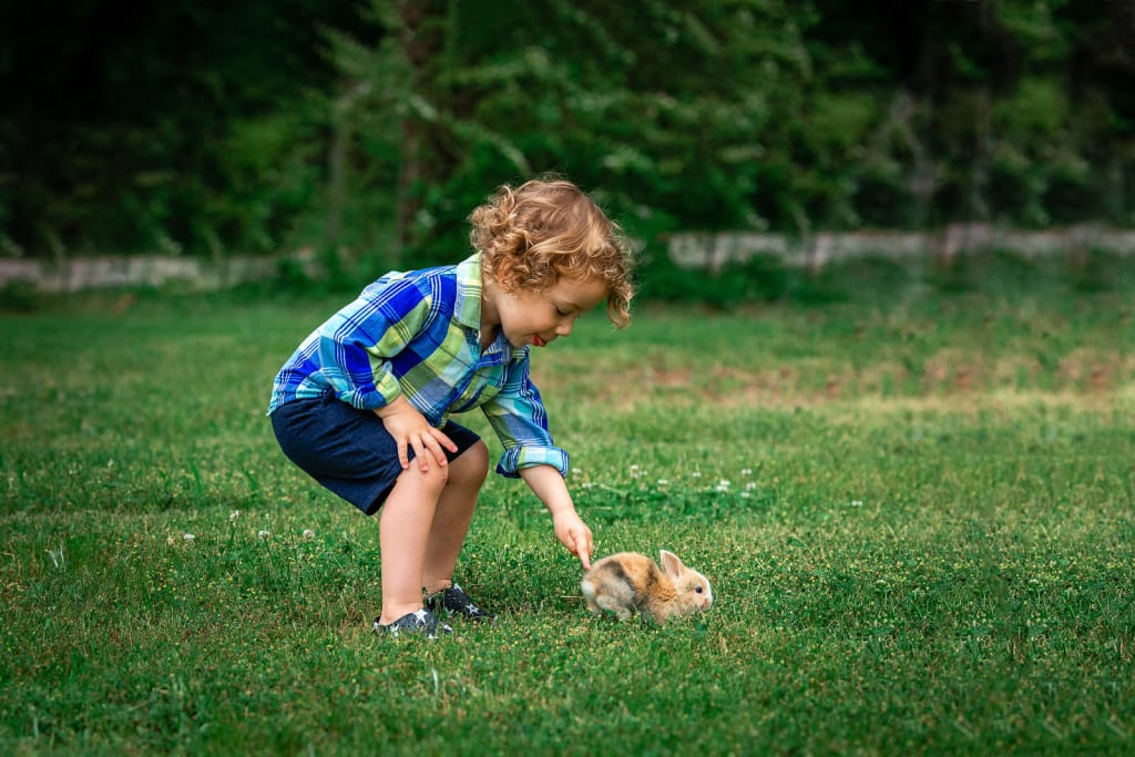 baby boy with bunny photo session with animals