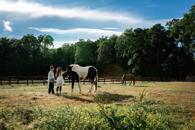 horse photo session at farm