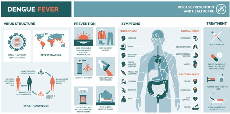 What Are The Symptoms Of Dengue