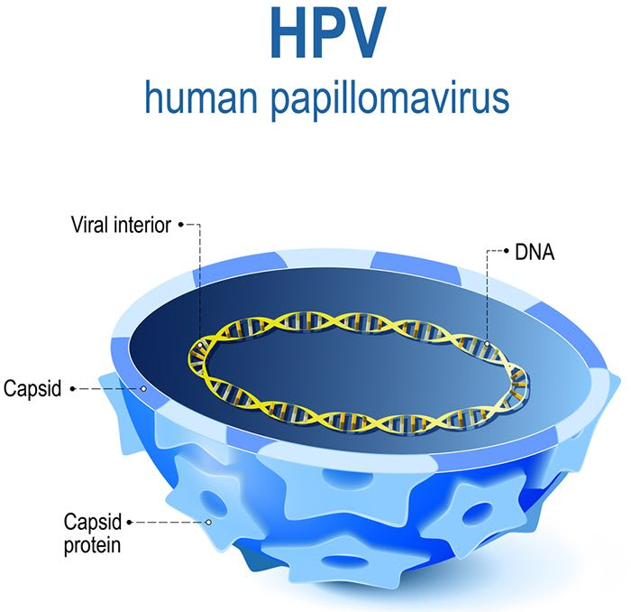 Human Papillomavirus (HPV) Infection