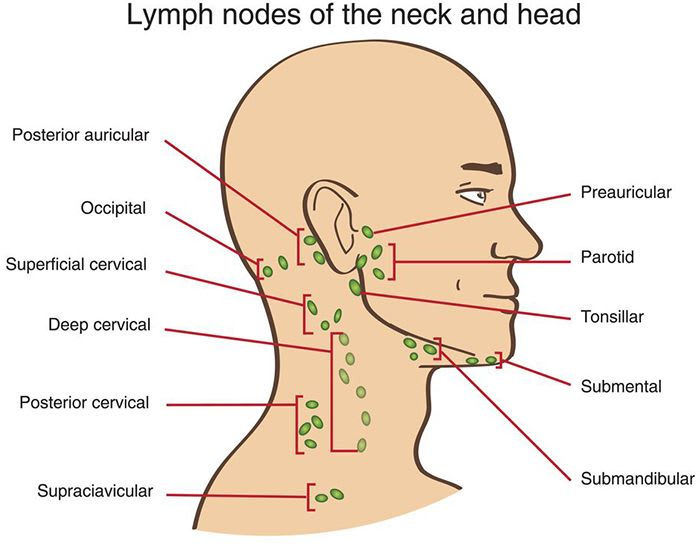 Lymph nodes of Head and neck cancer (HNC) or Or Head and Neck Squamous Cell Cancer (HNSCC) encompass a range of tumors that originates in hypopharynx, oropharynx, lip, oral cavity, nasopharynx, or larynx.