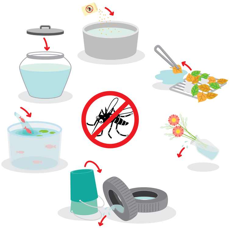 Common Causes of Zika Virus