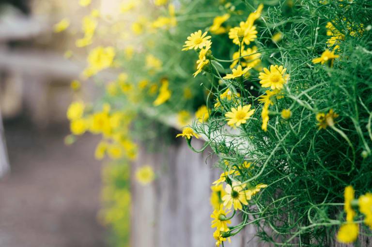 Photo de fleurs jaunes
