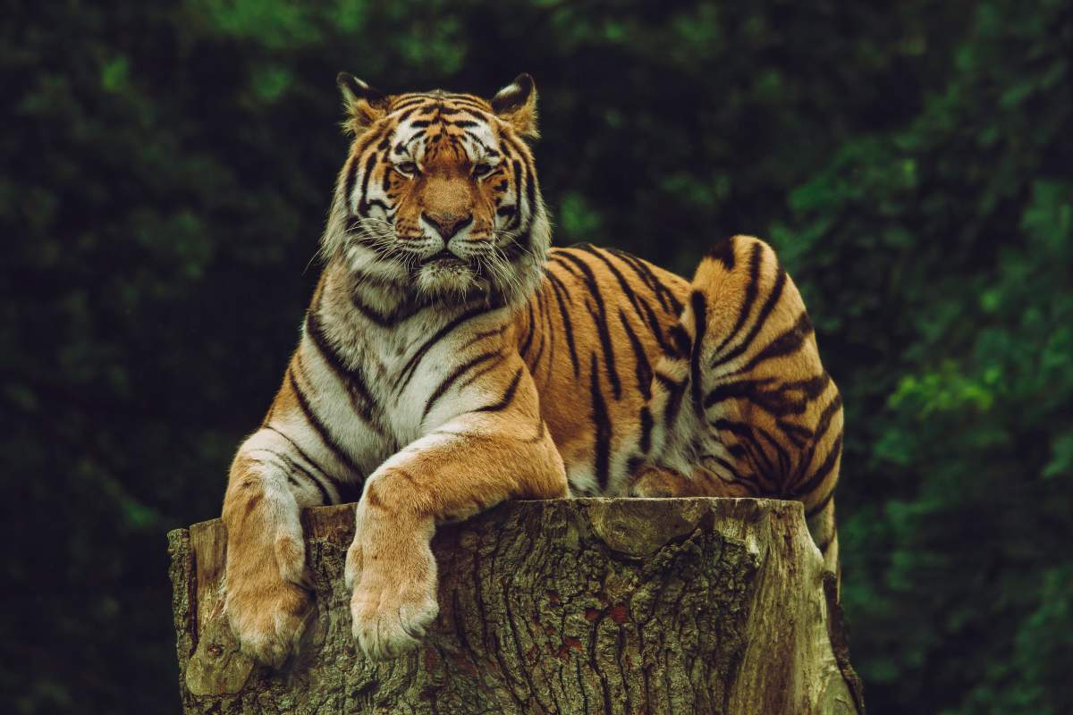 From Jaipur: Ranthambore National Park-3 hour Jeep or Canter Safari