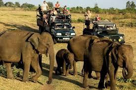 Yala National Park Safari Tour from Ella