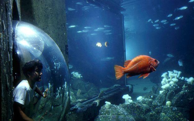 California's Redwoods with Aquarium Visit:  A San Francisco Tour