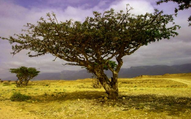 Guided Salalah East And West Combination Tour