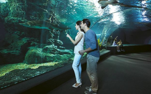 Water to Wax: SEA LIFE Bangkok Ocean World and Madame Tussauds Museum Combo Ticket