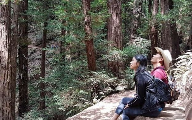 Super Saver By Day: Muir Woods Guided Tour with San Francisco Hop-on, Hop-off Bus Ticket