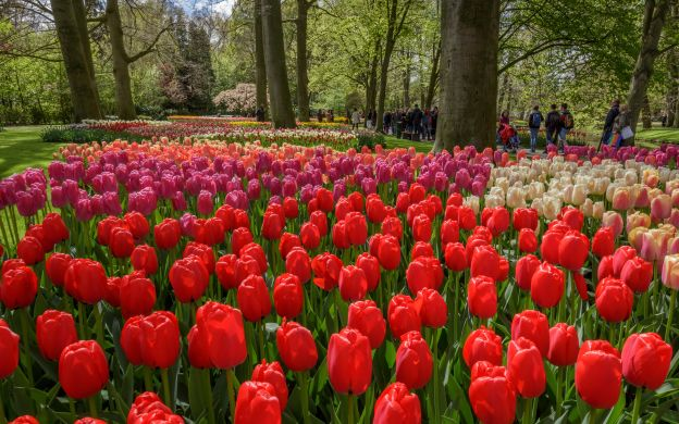 Keukenhof Gardens Tour and Optional Bulb Farm Visit - FREE Canal Cruise