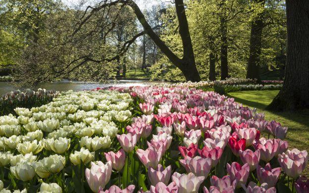 Amsterdam City Tour, Countryside & Keukenhof Gardens + FREE Canal Cruise